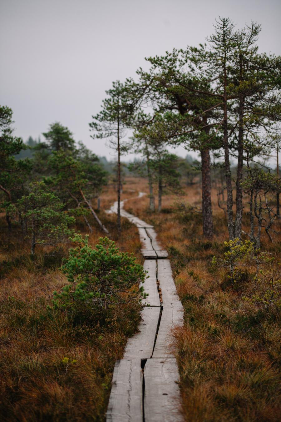 Valkmusan kansallispuisto Pyhtää