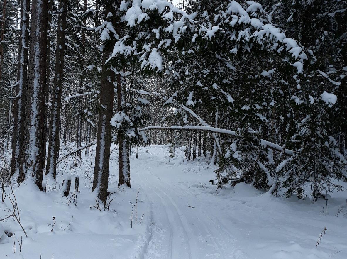 Hiihtolatu ja talvinen metsä