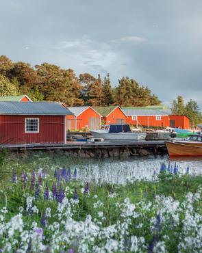 Kaunisaari Kuva Julia Kivelä