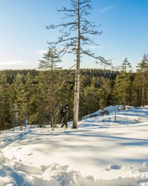 Haminan luonto talvella
