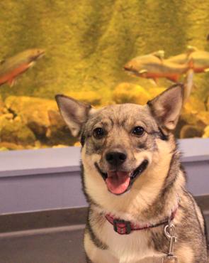Koira akvaariokierroksella Maretariumissa