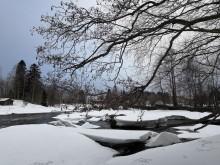 Kymijoen Siikakoski talvella